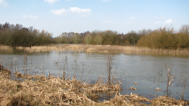 The River Yare at Colney