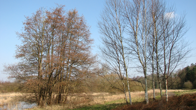 Trees beside the path along the edge of Colney Wood