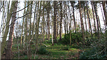 TG1608 : Wooded hill in Colney Park by Evelyn Simak