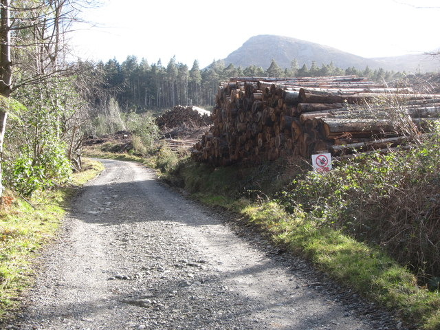 Harvested logs in Donard Wood