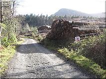 J3630 : Harvested logs in Donard Wood by Eric Jones