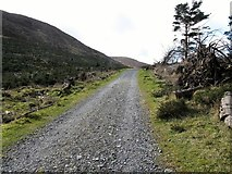 J3629 : Forest road in the col between Slievenamaddy and Drinnahilly by Eric Jones