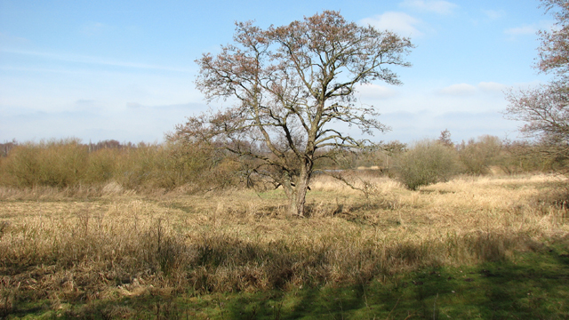 Tree beside the River Yare