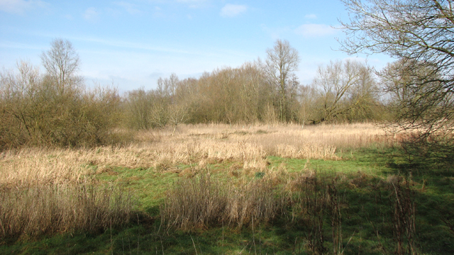 Between the River Yare and Colney Wood