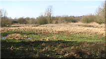TG1608 : Meadow beside the River Yare by Evelyn Simak
