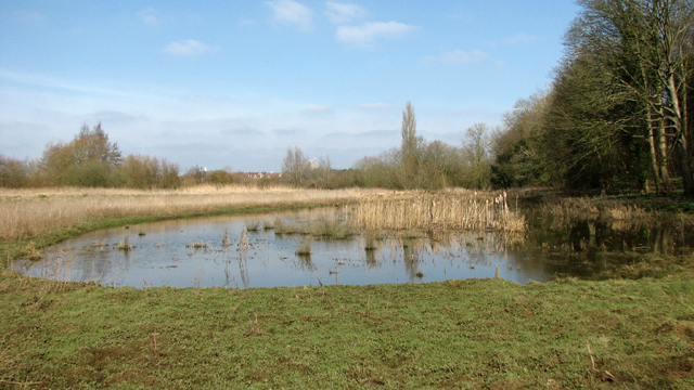 Pond beside the River Yare