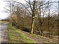 SD8203 : Heaton Park by David Dixon