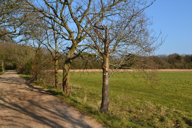 Trees beside track near Exbury by David Martin