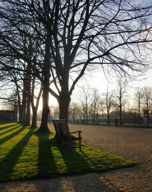 Trees by the forecourt at Ham House, on a March afternoon
