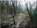SK6860 : Track in Duke's Wood by Graham Hogg