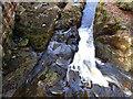 NZ8202 : Water Ark, West Beck by Mick Garratt