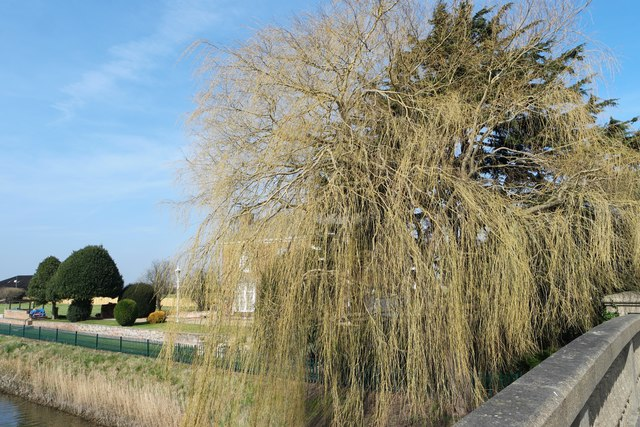 Willows at The Yews Farm