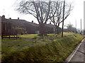 ST5859 : Wick Road daffs by Neil Owen