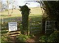 ST5859 : Livestock in field by Neil Owen