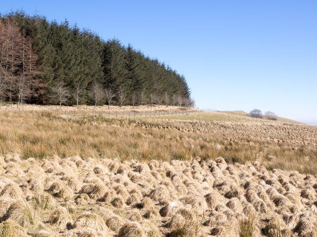 Grass tussocks on moorland