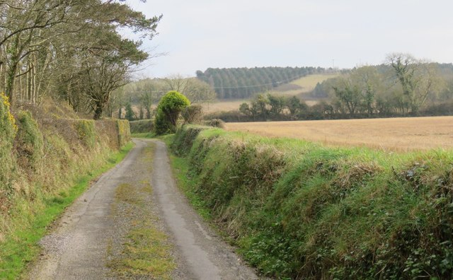 Narrow access road west of Carrigaline