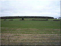TL8063 : Young crop field towards Windsor Wood by JThomas