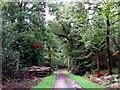 SP5101 : A ride in Bagley Wood by Steve Daniels