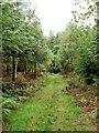 SP5101 : A woodland ride in Bagley Wood by Steve Daniels