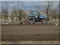 SE8431 : Tractor and gulls near Newport, E Yorks by Paul Harrop