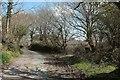 SX2262 : Lane at Scawns Farm by Derek Harper