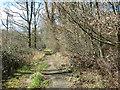 TG1500 : Path in Hethel Wood by Evelyn Simak