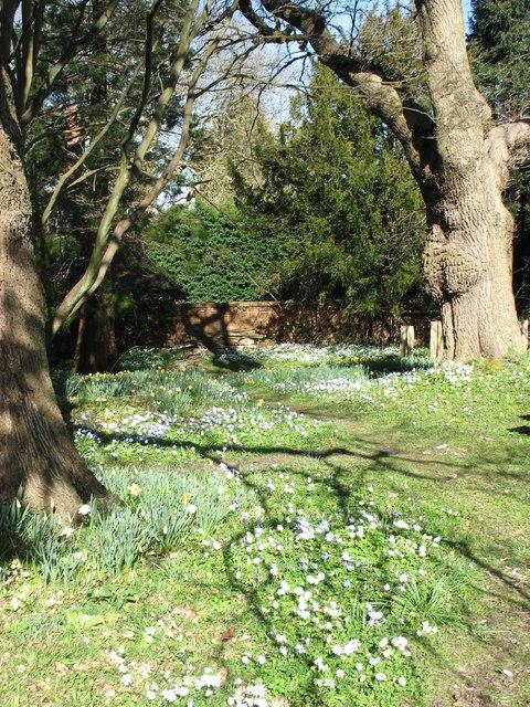 Spring flowers in the Botanic Garden