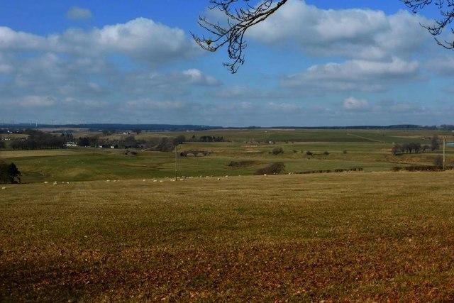 Pasture at Bloomsholm