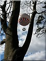 SZ0891 : Bournemouth: a balloon is stuck up a tree by Chris Downer