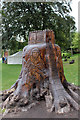 SK9771 : Helena Stylianides' Tree Stump Carving, Lincoln Castle by Jo Turner