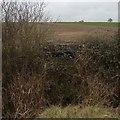 TL1462 : Well hidden pill box by Dave Thompson