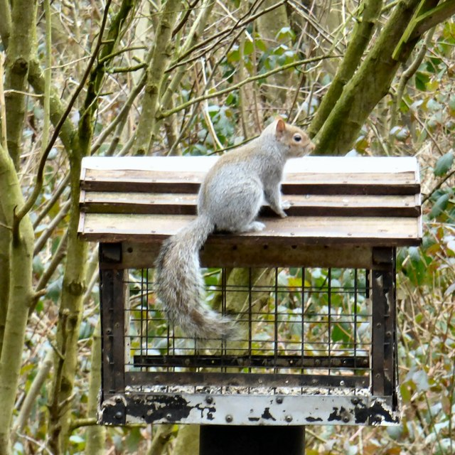 Squirrel at Moore Nature Reserve