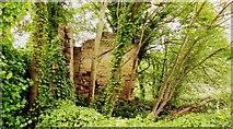 SE2536 : Ruins, River Aire, Kirkstall, Leeds by Mark Stevenson