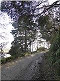 SW6424 : Footpath in Bar Walk Plantation by David Smith