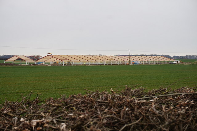 New chicken sheds at White House Farm, Thirtleby