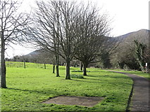 J3731 : Young trees in Islands Park, Newcastle by Eric Jones