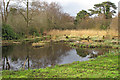 TM4690 : View of the old Decoy Pond from the Hide, North Cove Nature Reserve by Roger Jones