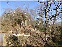 SX7979 : Yeo Copse near Wilford Bridge by David Smith