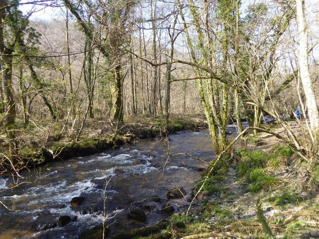 River Bovey in Hisley Wood