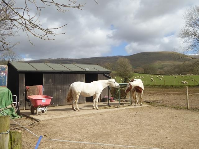Horses at Knock