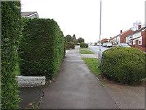ST3091 : Pavement and hedges, Rowan Way, Malpas, Newport by Jaggery