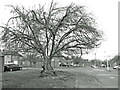TQ0685 : Old Cherry Tree, Malcolm Road by Des Blenkinsopp