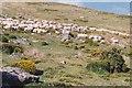 SH6466 : Danfon defaid i'r mynydd yng Nghwm Caseg/ Herding sheep towards the upland pastures in Cwm Caseg by Eric Jones