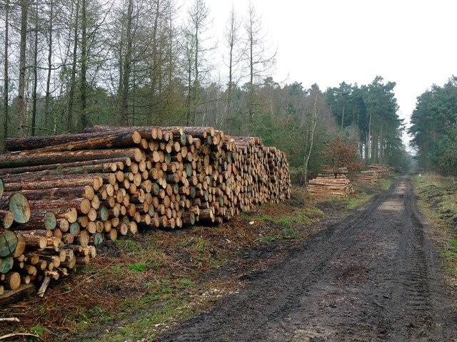 Log pile in Gorse Covert