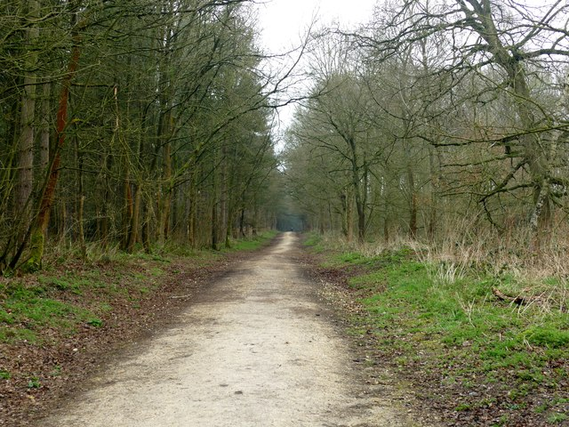 Track in Sansom Wood