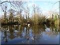 SO8642 : Island Pool, Earl's Croome by Philip Halling