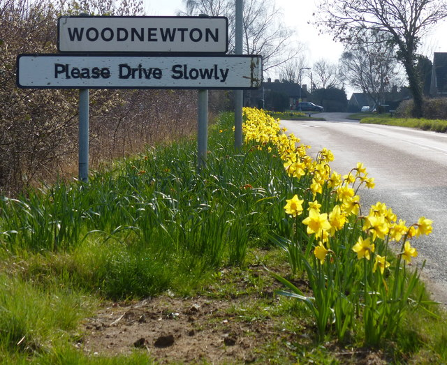 Daffodils next to the village sign