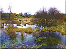 H5672 : Swampy ground, Mullaghslin Glebe by Kenneth  Allen