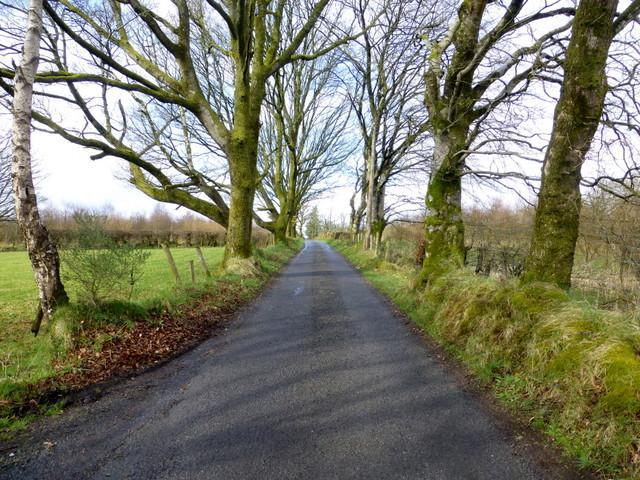 Trees along Gap Road