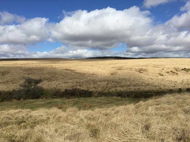 Tussocky Grassland